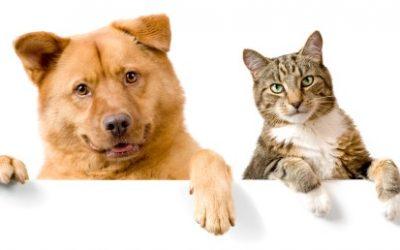 Humanitarna akcija zbiranja hrane, odej, igrač in priboljškov  za živali v Zavetišču za živali Maribor