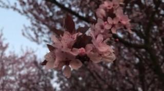 pomlad-c5a1p