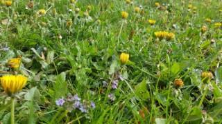 pomlad-nk
