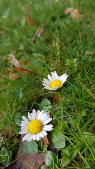 pomlad-nk2
