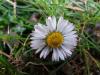 pomlad-vc5ber