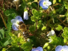 pomlad_vc5ber2