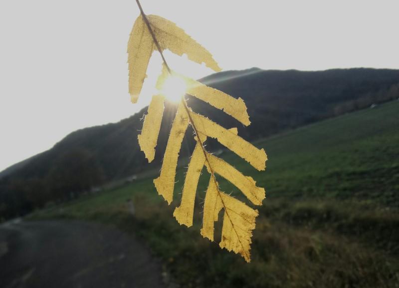 jesen_ak-custom